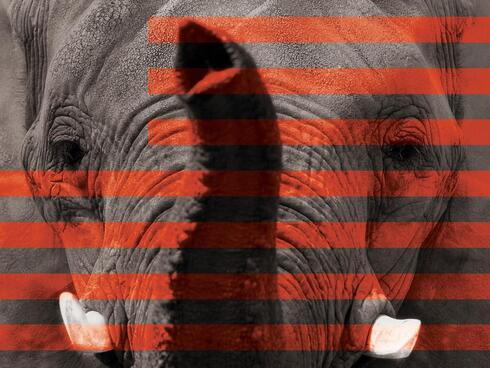 Elephant behind a silhouette of the American flag