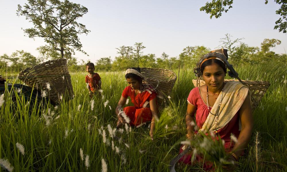 Women cutting grass