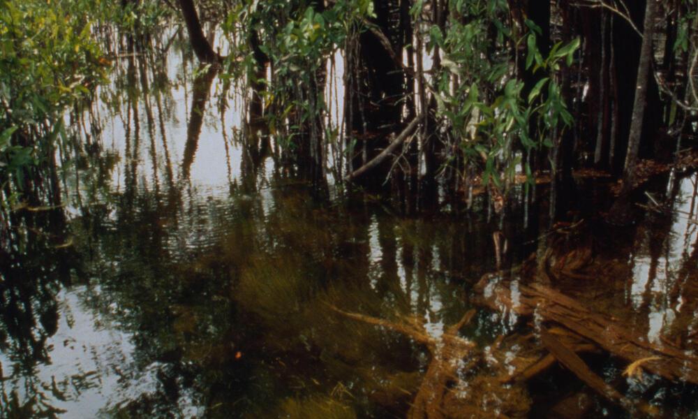 Rio Negro and Amazon rivers