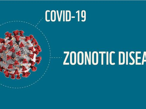 COVID is a zoonotic disease