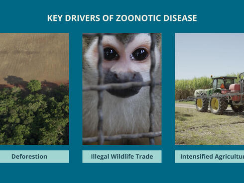 Key drivers of zoonotic disease: deforestation, illegal wildlife trade, intensified agriculture