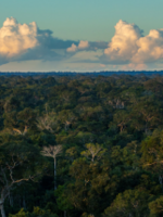 Transforming Peru's forest sector Brochure