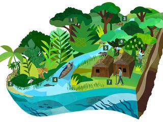 Amazon illustration