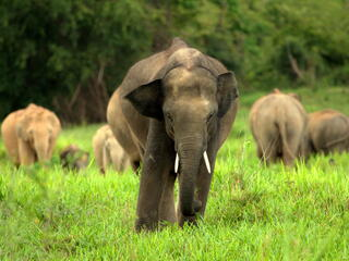 asian elephants kui buri thailand