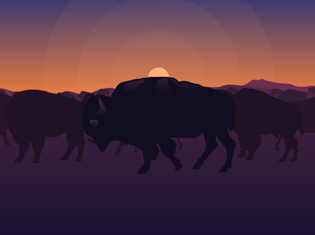 illustrated silouettes of bison standing in in front of an illustrated sunset
