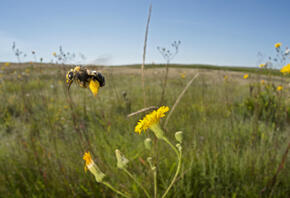 An open grassland of the northern great plains