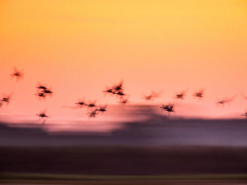 colomia birds winter2017