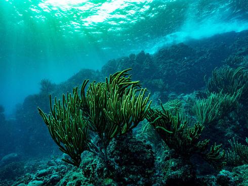 columbia underwater winter2017