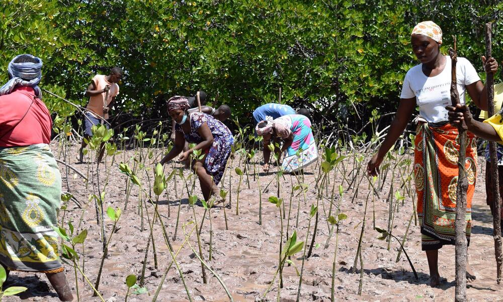 A group of women planting saplings in the dirt