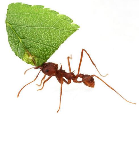 conersation ant winter2018