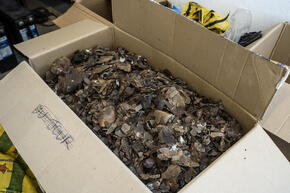 A cardboard box full of confiscated pangolin scales in varying shades of gray and brown.