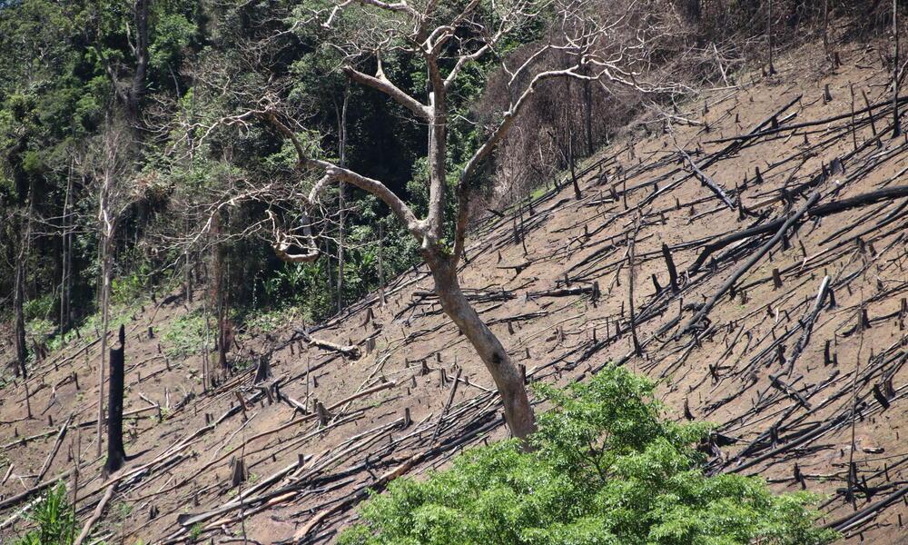 degraded land WW286701 Tim Cornin