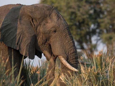 discover elephant summer2018