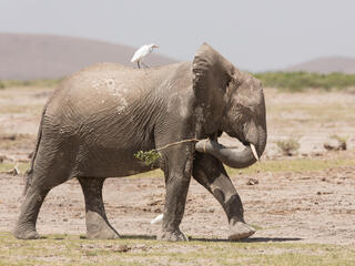 elephan summer2019