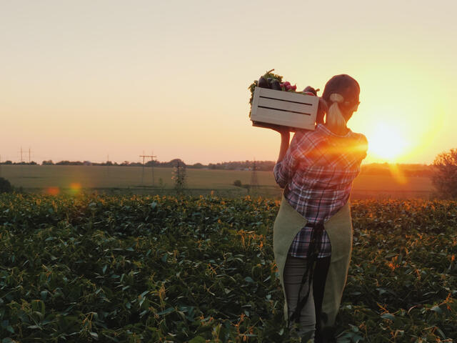 A female farmer with a box of fresh vegetables walks along her field
