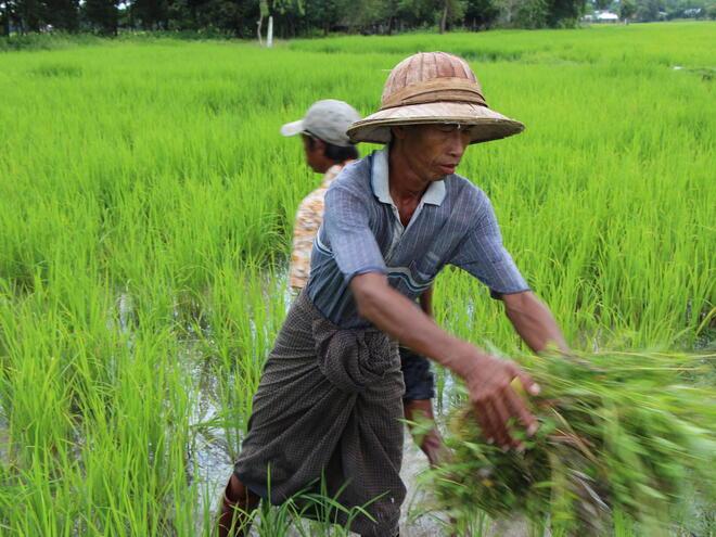 Man farming in Myanmar