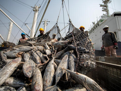Workers sorting tuna