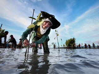 feature mangrove indonesia summer2018