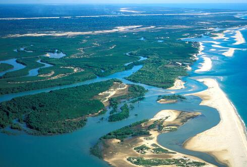 feature mangrove madagascar summer2018