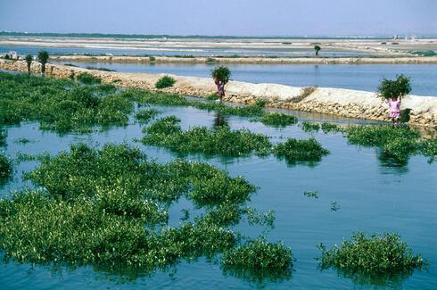 feature mangroves pakistan summer2018