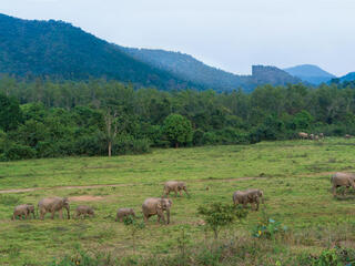 feature thailand elephants winter2018