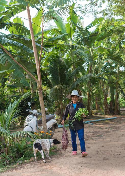 feature thailand farm dog winter2018