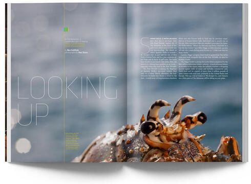 Spiny Lobster magazine article