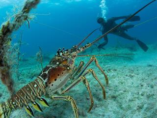 fisherman and lobster Mac Stone WW1103815