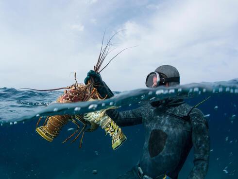 fisherman catching lobster Mac Stone WW1103816