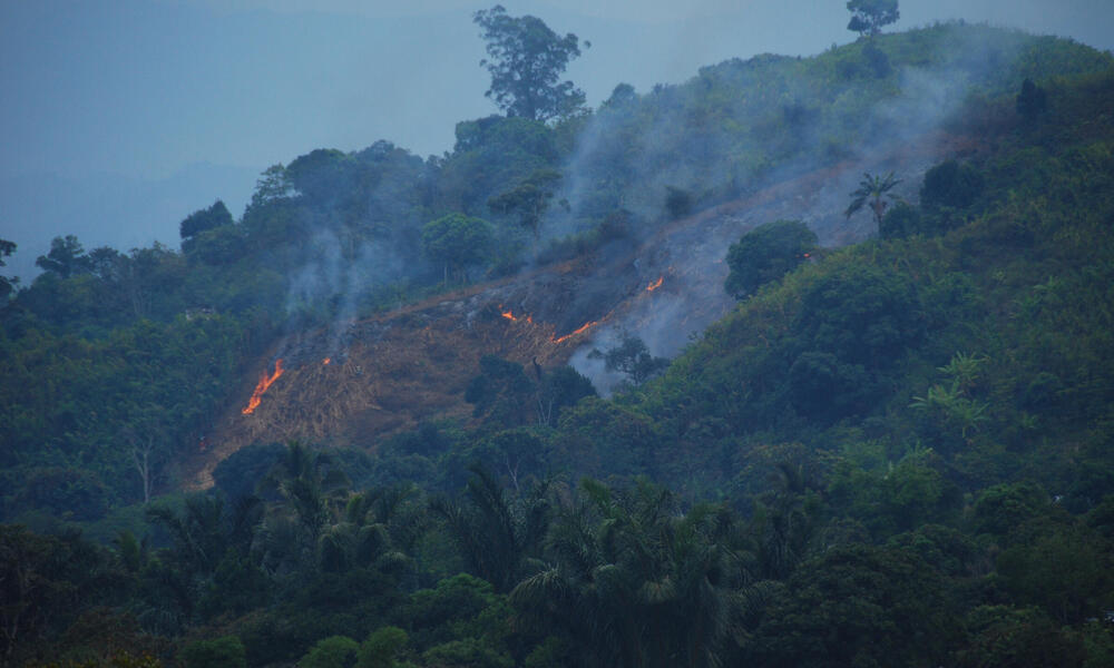 forest fire Madagascar WW199886 Martina Lippuner