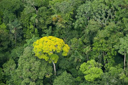 Aerial shot of the forest canopy