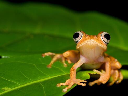 Frog on a leaf in Madagascar