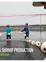 Future proofing shrimp production Brochure
