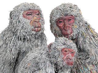 gallery monkey winter2017