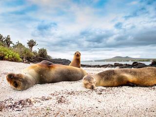 Seals on a beach