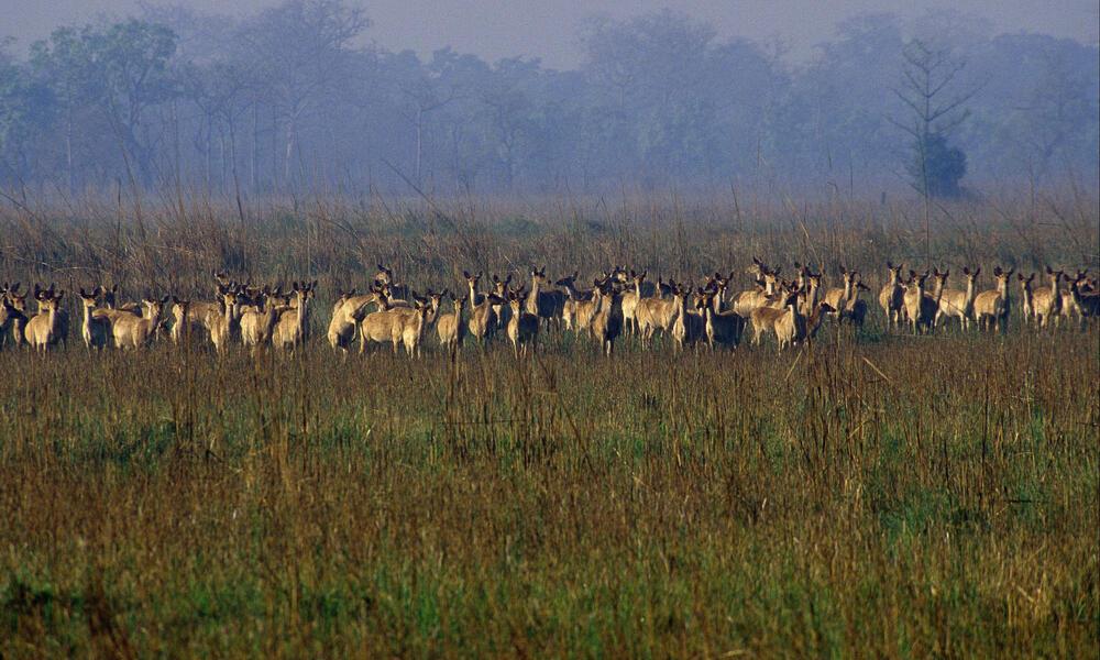 Royal Shuklaphanta Wildlife Reserve