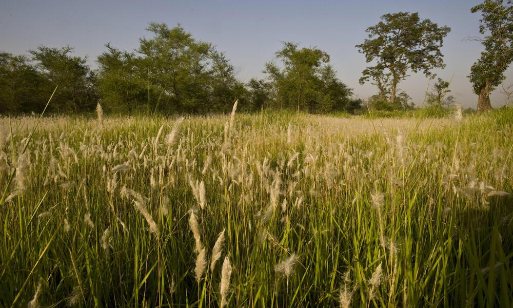 Khata, Royal Bardia National Park
