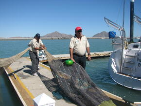 Testing Alternative Fishing Gear to Reduce Bycatch.