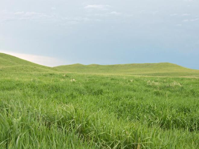 Healthy grasslands in Lowry, South Dakota