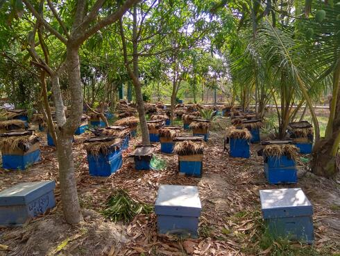 Honey collection in the Sundarbans