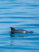 Vanishing Vaquita:  Saving the World's Most Endangered Marine Mammal Brochure