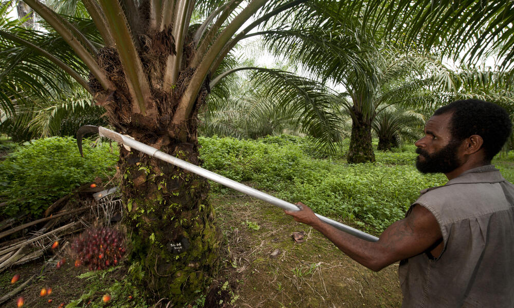 Papua New Guinean worker