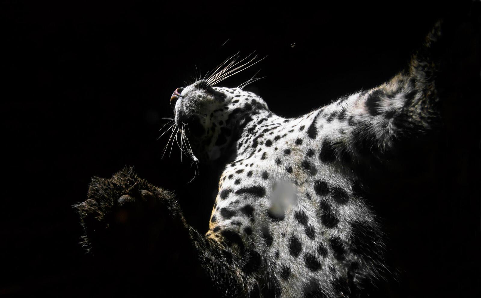 jaguar under fall2017