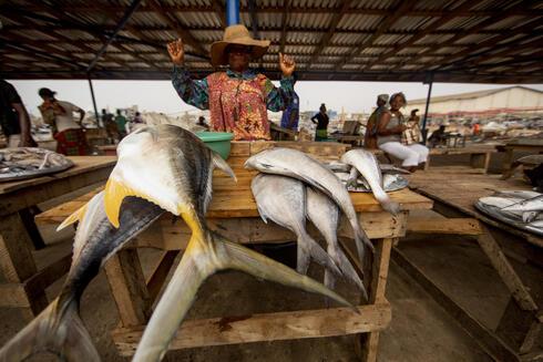 Mami Pkpone, a local fish retailer selling yellowfin tuna at Tema market, Ghana.
