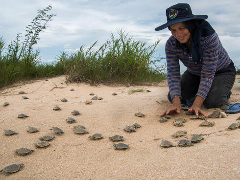 Lola, Primary School teacher and Voluntary coordinator of the freshwater turtle conservation project, helps river turtles hatchlings to get out of their nest before the water level of the river rises too high and floods the beach.