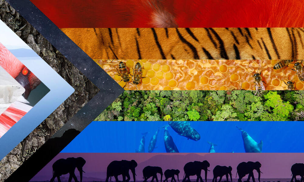 An adaptation of the PRIDE flag with colors of nature