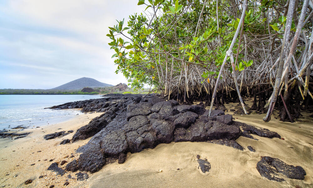 oves on Baronesa Bay, Floreana Island, Galapagos, Ecuador
