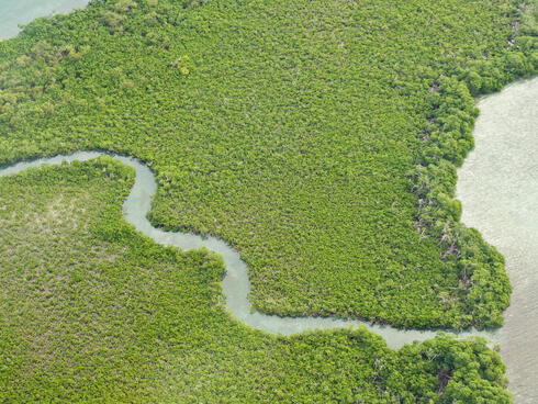 mangrove in Belize WW1106020