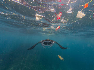 manta ray and plastic WW2122234 Vincent Kneefel