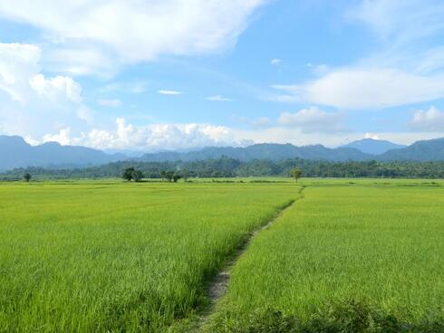 Field near Singlijan forest reserve, Assam, India